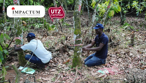 Projet UTZ : Partnership cocoa and climate change in Cote d'Ivoire